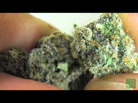 Blackberry OG Strain from The Pharm (Medical Marijuana)