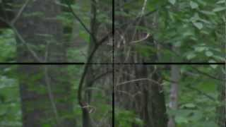 preview picture of video 'Sniper Scope Camera KJW M700P 2'