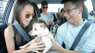 UBER Driver Surprises Passengers with ADOPTED PUPPIES