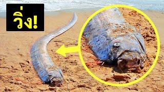 ถ้าคุณเจอปลาชนิดนี้ ให้หาที่หลบโดยเร็ว (และสัญญาณเตือนภัยพิบัติธรรมชาติต่างๆ)
