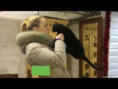 Новогоднее чудо: хозяйка нашла кошку спустя семь месяцев поисков