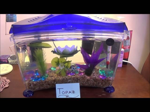 Betta Fish Tank Tour February 2015