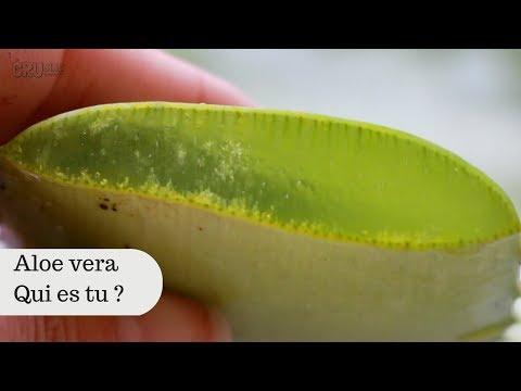 Le microorganisme végétal sur longle de la main de lenfant