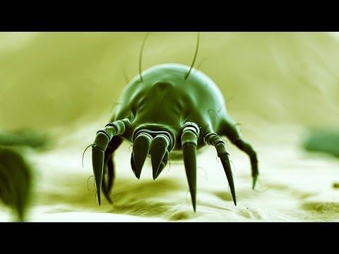 Ist oder nicht beim Welpen die Würmer