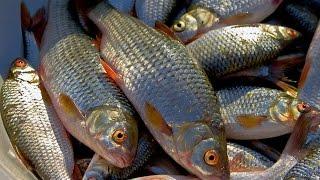 Наживка для рыбалки барнаул