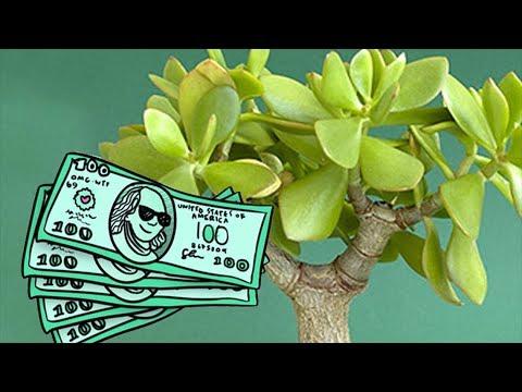 Комнатные растения  по фен-шуй для привлечения богатства в дом.