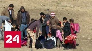 IHS Markit: боевики ИГИЛ применяли химоружие в Ираке и Сирии более 50 раз