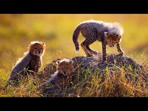 東非肯亞 動物的天堂 8日 特惠團 NBO08A