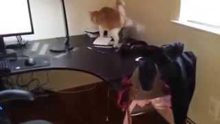 Смотреть онлайн Чтобы кот не лазил по столу