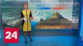 """""""Погода 24"""": белая бора в Новороссийске"""