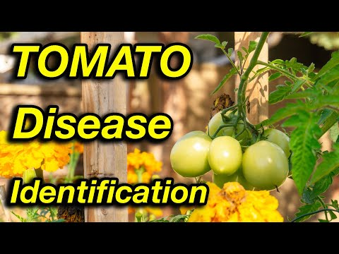 , title : 'Stop worrying about tomato diseases. Watch this!'