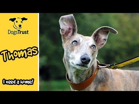 Meet Thomas! | Dogs Trust Darlington