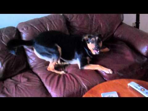 Dogs Do Not Like Lightsabres