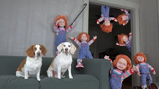 Chucky Army Invades Dogs' House: Funny Dog Maymo Calls Predator & Gets Surprise Car Ride