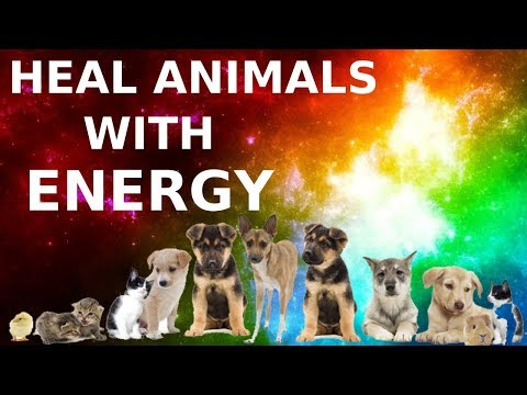 How to Heal Animals With Reiki Energy (Heal Your Pets) - YouTube