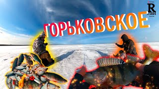Отчеты о рыбалке на горьковском море 2020