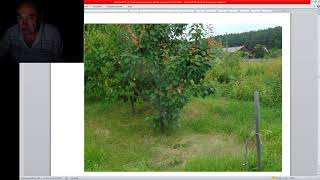 Где лучше сажать Деревья - Валерий Железов