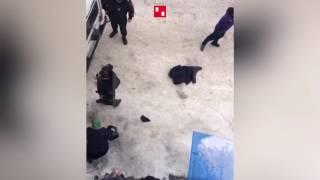 Драка молодежи с полицейскими в Дагестане. 28 февраля 2017