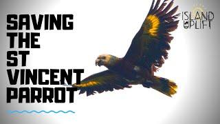 Saving the St Vincent Parrot