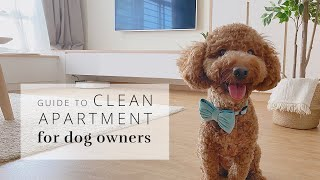 Dog Owners Guide to a Clean Apartment + BOWTIX review