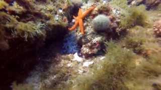 preview picture of video 'Séjour plongée à Niolon - UCPA - Juillet 2013 - GoPro'