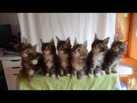 Testiranje reakcija 7 malih mačića