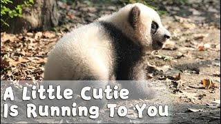 Hey! A Little Cutie Is Running To You | iPanda