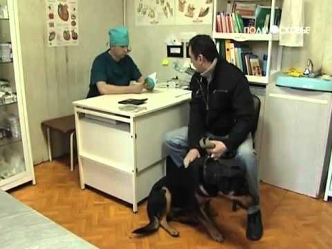 Собак и кошек области возьмут на учет