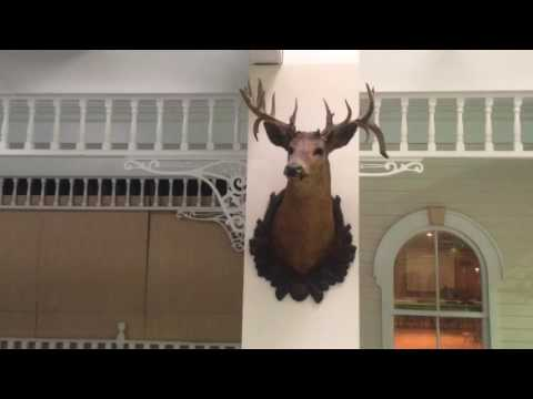 DEAD MALL : Finger Lakes Mall, Auburn NY