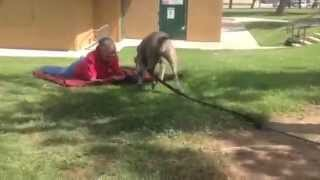 CORONA ANIMAL SHELTER APRIL 9, 2014