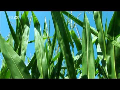 Das Referat zum Thema die Fette wie das Produkt eine Ernährung und der chemischer Rohstoff das Refer