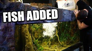 35 FISH ADDED TO 2,000G AQUARIUM!!