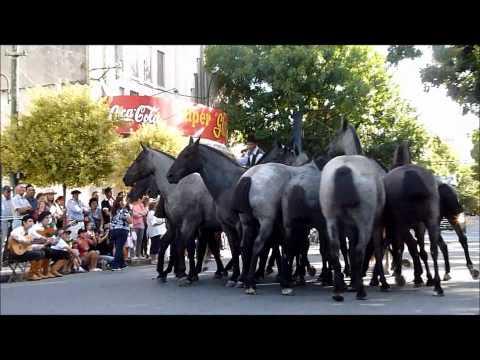 Desfile tracidionalista