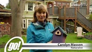 DYK Birdhouses