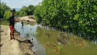 🔴 MANCING KEPITING, DI TAMBAK SUPER BANYAK KEPITING BAKAU( CRAB FISHING )