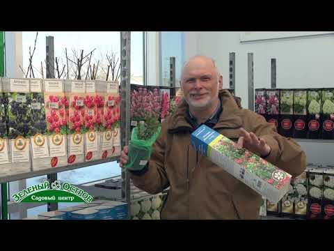 Выращивание брусники на участке, новые крупноплодные сорта брусники