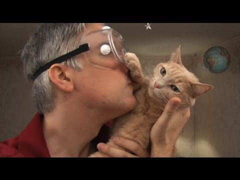 Insinöörin kissaopas 2.0