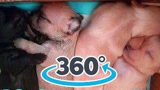 LG 360 Camera -2 week old puppies feeding