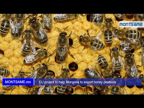 EU project to help Mongolia to export honey products