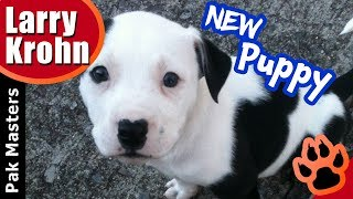 What to do when bringing your new puppy home for the first time