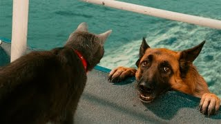Смешные Кошки и Собаки - Кошки Против Собак - Смешные Животные Сентябрь 2016 (Выпуск #1)