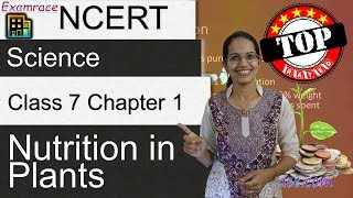 NCERT Class 7 Science Chapter 1: Nutrition In Plants (NSO/NSTSE/Olympiad) | English