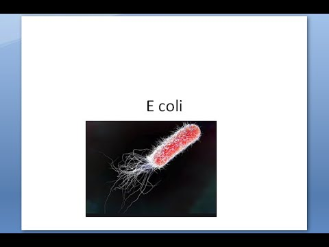 Emberi bőr paraziták férgek