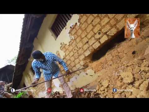 Video Heboh!! Ditemukan ular cobra bersarang di dalam tembok rumah warga!!