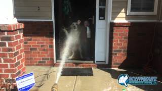 dog and child and pressure washer