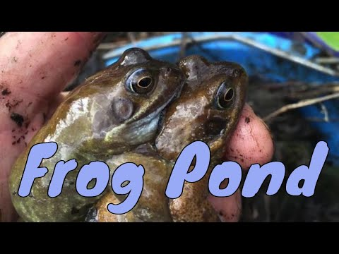 An Ideal British Frog Pond | Common Frog | UK Frog Mp3
