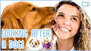 How to Look After a Dog!
