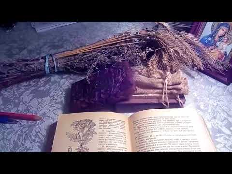 Ликоподий (плаун булавовидный), описание и лечебное применение.
