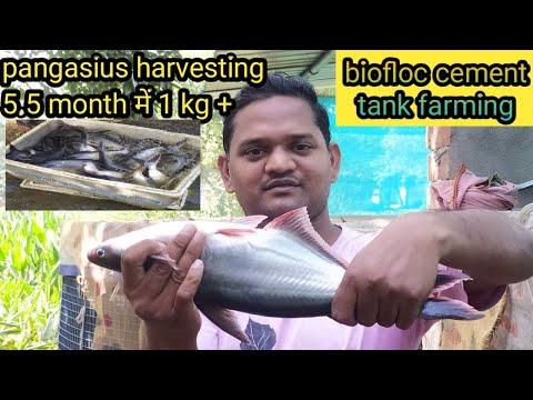 Paraziták és nyálka a belekben