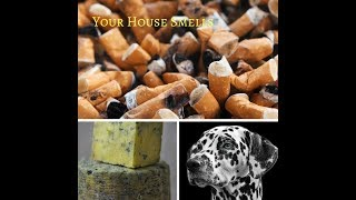 Your House Smells